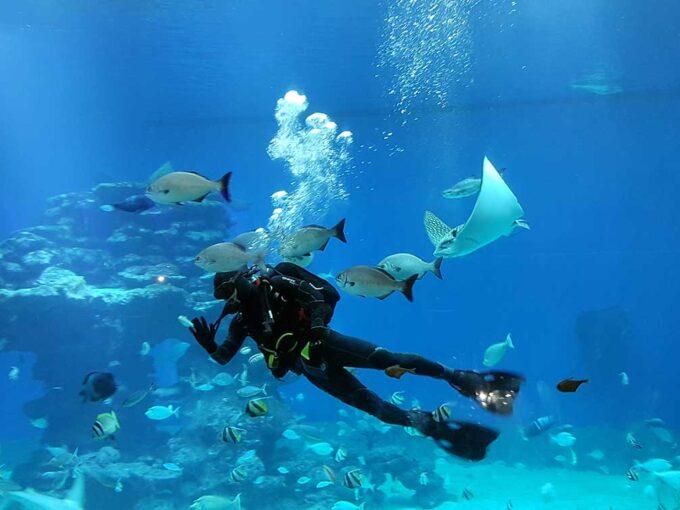Океанариум в Эйлате